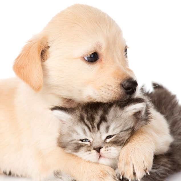 how pet friendly is your home   jnt developers